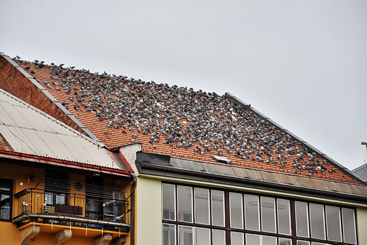 A2B Pest Control are able to install spikes to deter birds from roofs in Grove Park.