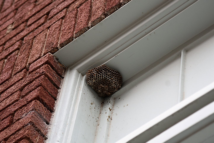 We provide a wasp nest removal service for domestic and commercial properties in Grove Park.